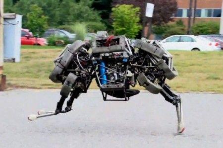 wildcat-robot